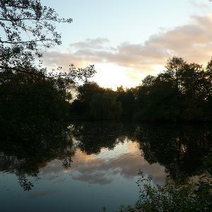 Bürgerfelder Teich - ein schöner Ort am Wald...